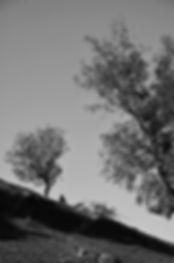 DSC_5757-2.jpg