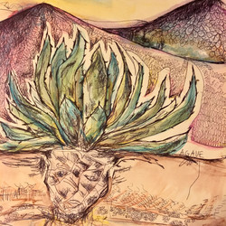 Texas Agave, Ink and Watercolors