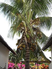 interdit de faire la sieste sous un cocotier
