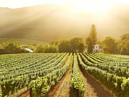 同時擁有「新.舊」世界血統的南非葡萄酒產區