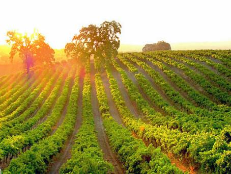 物美價廉的「新世界之星」智利葡萄酒產區