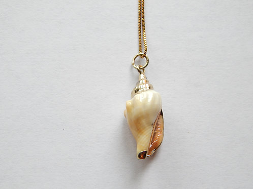 Necklace - Medium Shell - Gold over Sterling Chain - Muggie Jewelry