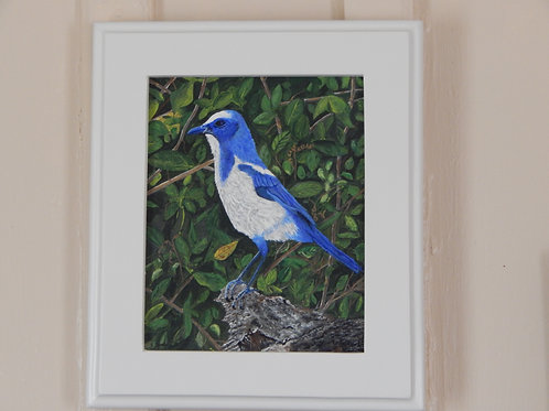 Framed Scrub Jay - Original Art - Karen French