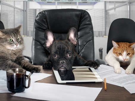 Red Rover, Red Rover, Can Fido Come to the Office?