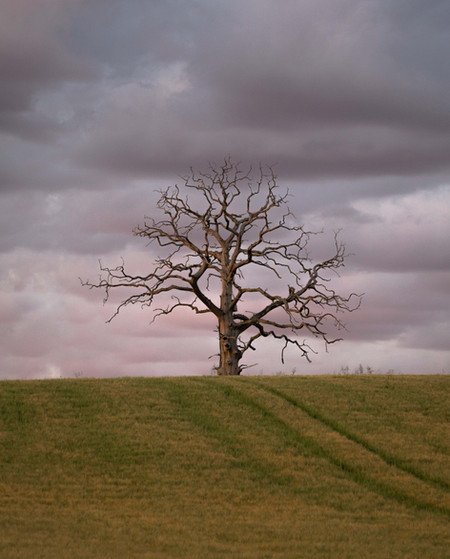 Lone Tree - Coaley