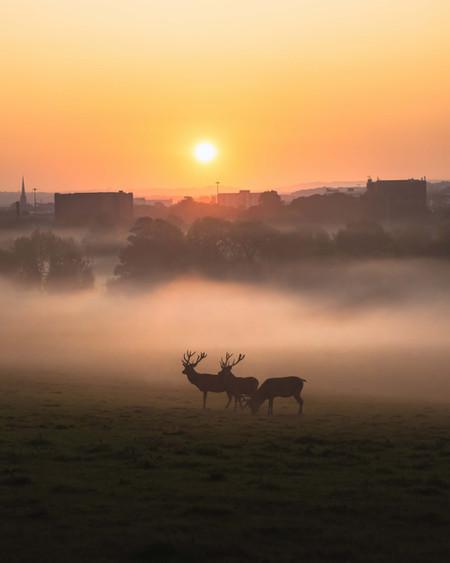 Sunrise at Ashton Court Estate