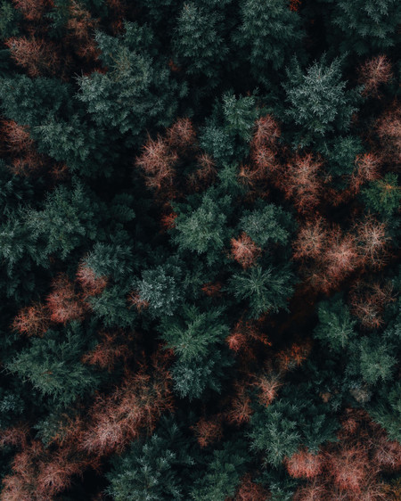 Stockhill Woods Aerial