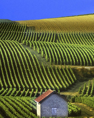 panoramic-view-of-vineyards-champagne-fr