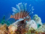 Lionfish Hunt Experience