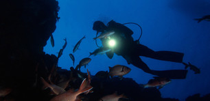 Guided Night Diving