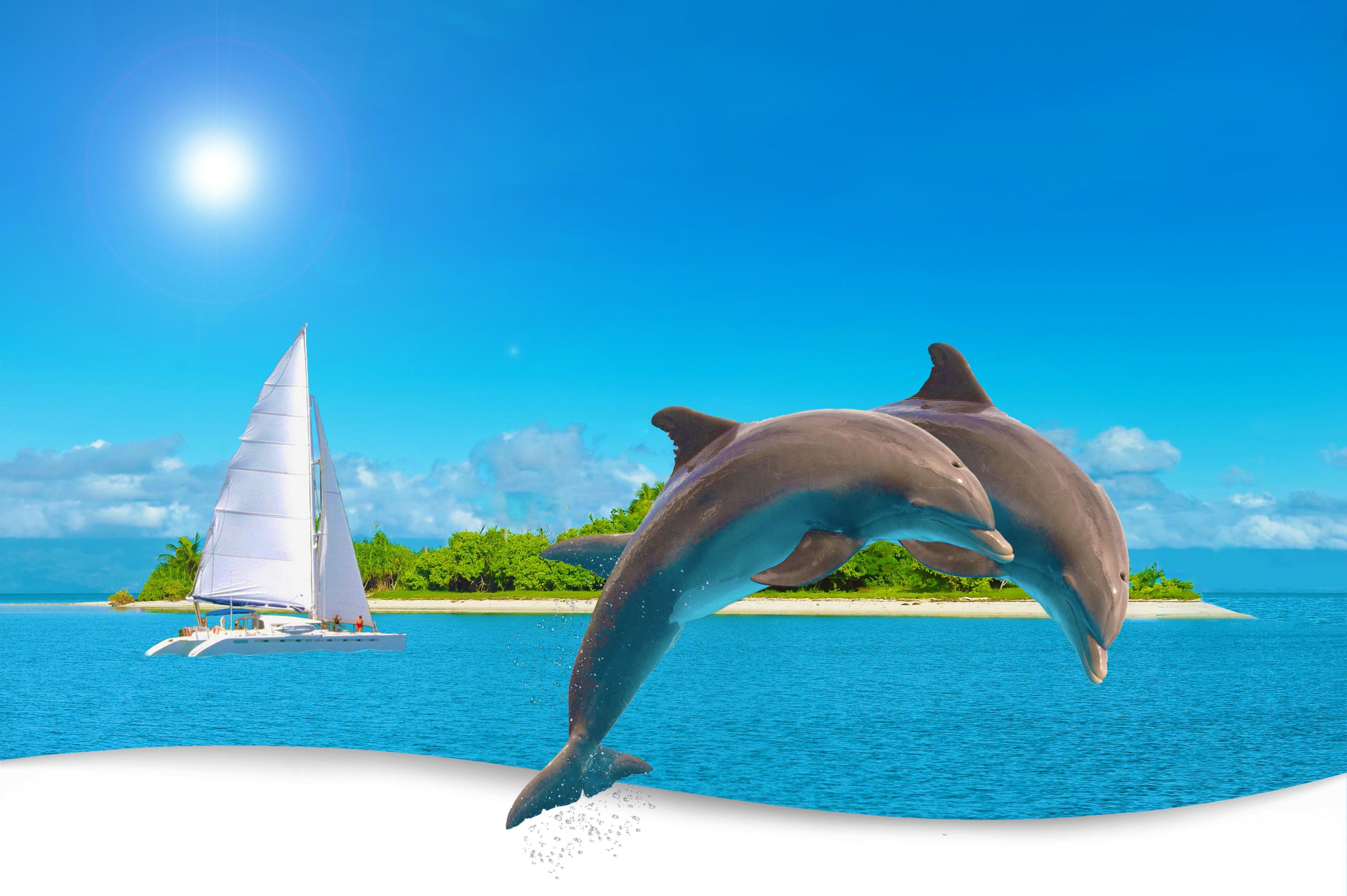 Dolphin WP32