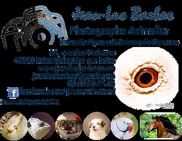 BANDEAU_PHOTOS_ANIMALIER_LAND.png