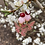 Thumbnail: Cherry Blossom Butterfly