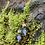 Thumbnail: Pastel Willow Drops