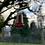 Thumbnail: Dainty Redwoods