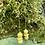 Thumbnail: Lemon Drop Martini