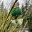 Thumbnail: Green Spring