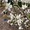 Thumbnail: Butterfly Picnic