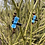 Thumbnail: Dragonflies on Tigers