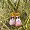 Thumbnail: Sunny Bunny