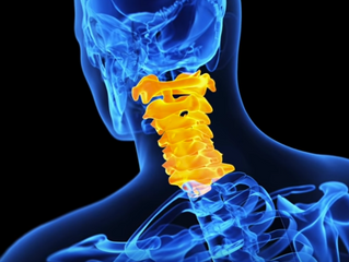Getting Down to the Bare Bones : The Structural Anatomy, Function and Movement of the Spine