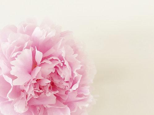 Blushing Pink Fondant Peony