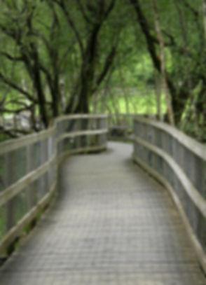forest-2678111_1280.jpg