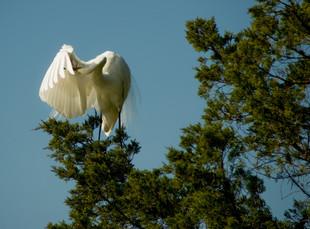 27-ChrisBain_KiawahShorebirds27.jpg
