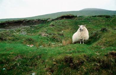 Ireland_0006.jpg