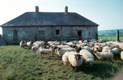 Ireland_0022.jpg