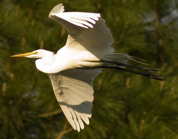 09-ChrisBain_KiawahShorebirds09.jpg