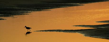 14-ChrisBain_KiawahShorebirds14.jpg