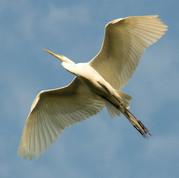 19-ChrisBain_KiawahShorebirds19.jpg