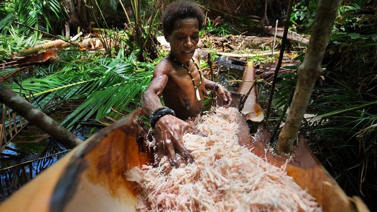 Ekspedisi Rimba Papua