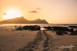 140820-SA-001-Turtle-Up-tracks-at-sunset -2084