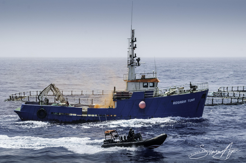 SA Libya Libyan Waters Sea Shepherd Releasing Bluefin Tuna Rosaria Delta Smoke Grenade 003 2253