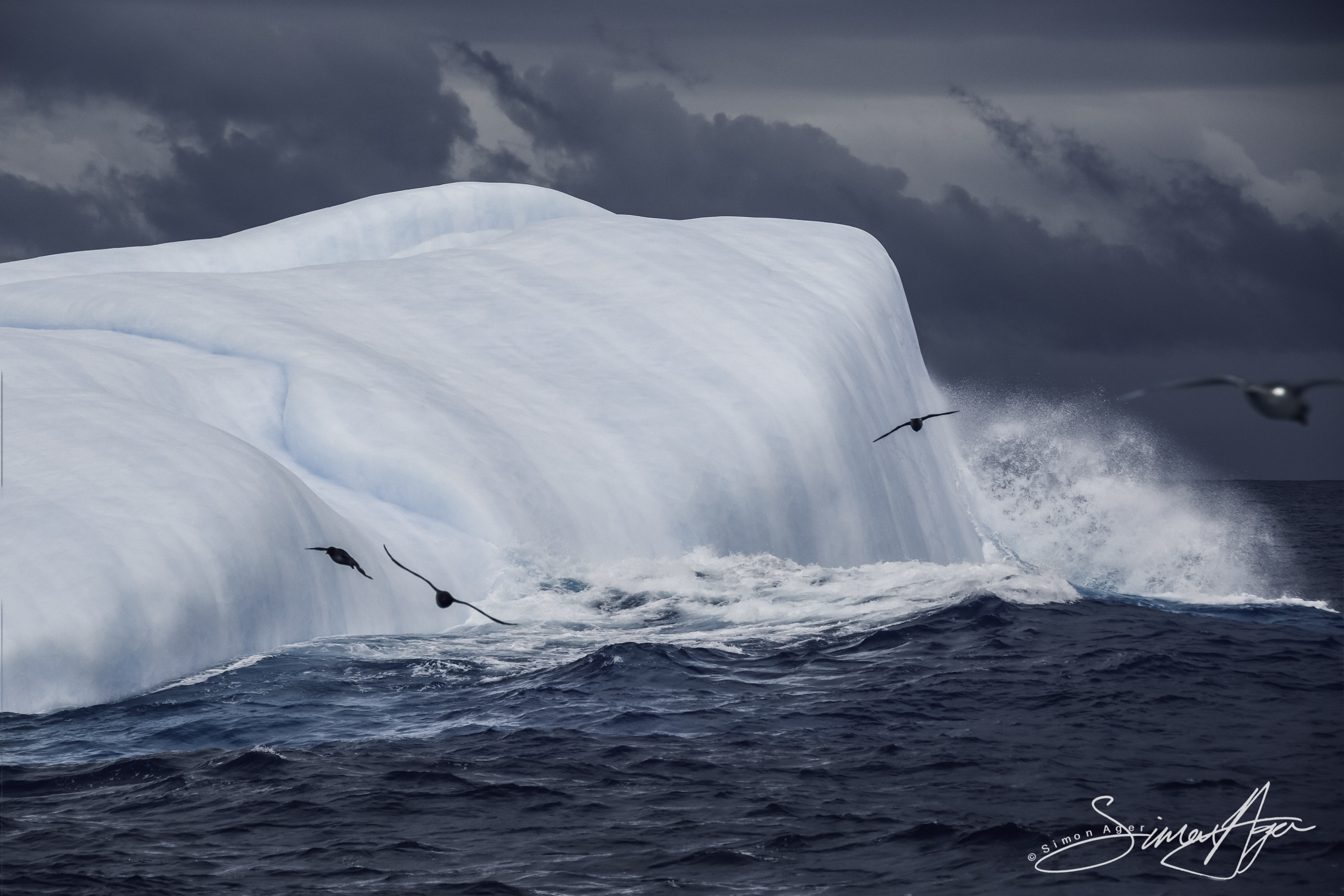 170214-SA-Snow-petrels-pass-in-front-of-iceberg-001-2