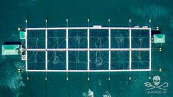 160730-SA-Drone-studies-of-Venture-Point-fish-farm-0051