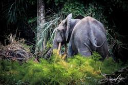 160618-SA-066A5492-Elephants