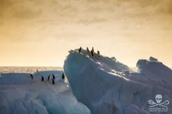 110208_SA_Penguins_Growlers_Sunset_002_6914.jpg