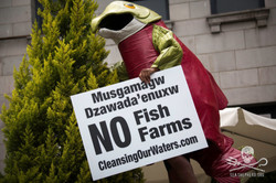 160905-SA-First-Nations-descend-on-Vancouver-to-demand-fish-farms-out-of-Musgamagw-Dzawada'Enuxw-ter