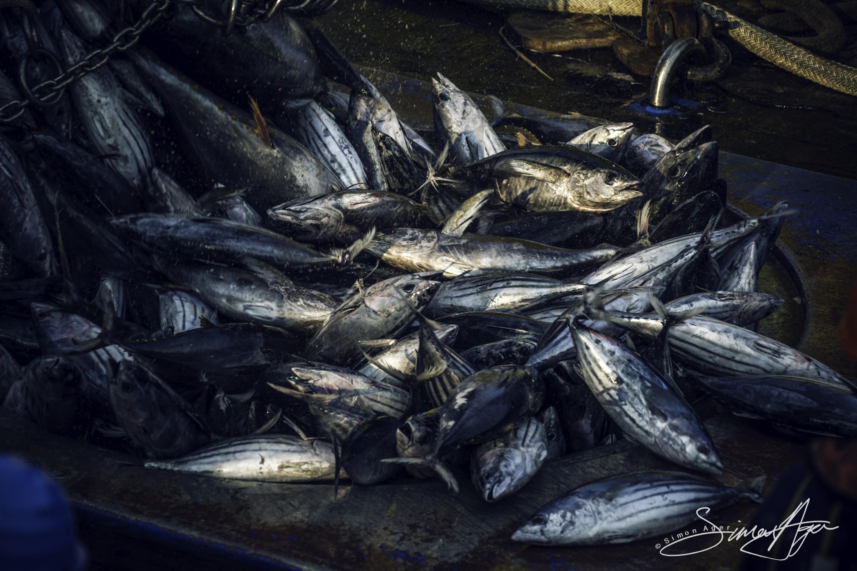 160604-SA-Cape-Coral-deck-crew-work-to-haul-tuna-catch-3071