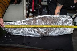 150419-SA-Fish-sample-from-vessel-Thunder-5110