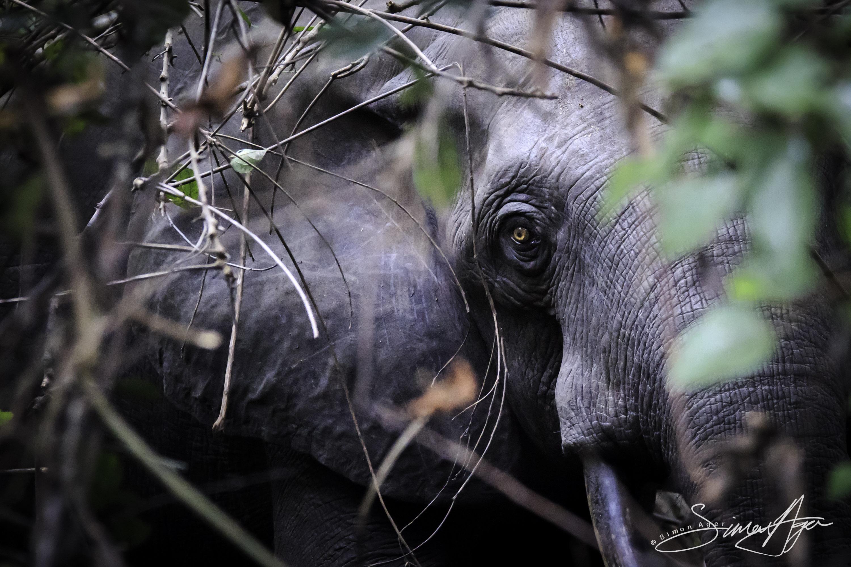 160618-SA-066A5474 Elephant