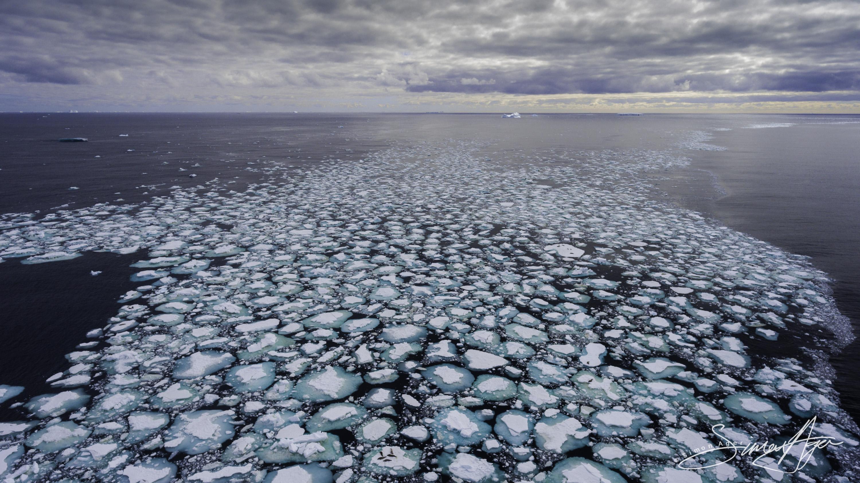 170205-SA-Fur-seals-laze-around-on-ice-pans-017-0356