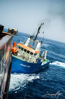 SA Libya Libyan Waters Sea Shepherd Releasing Bluefin Tuna Rosaria ramming Steve Irwin 001 2217