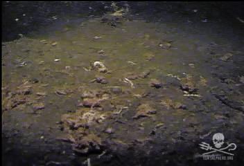 160809-SA-Seafloor-beneath-salmon-farm-ROV-pov-860