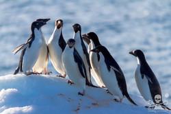 110209_SA_Penguins_on_Ice_001_7204.jpg