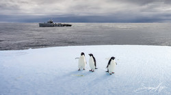 170219-SA-Adelie-penguins-on-ice-042-