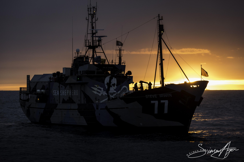 170204-SA-Steve-Irwin-at-sunrise-001-6037